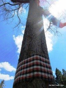 Ancient, noble tree