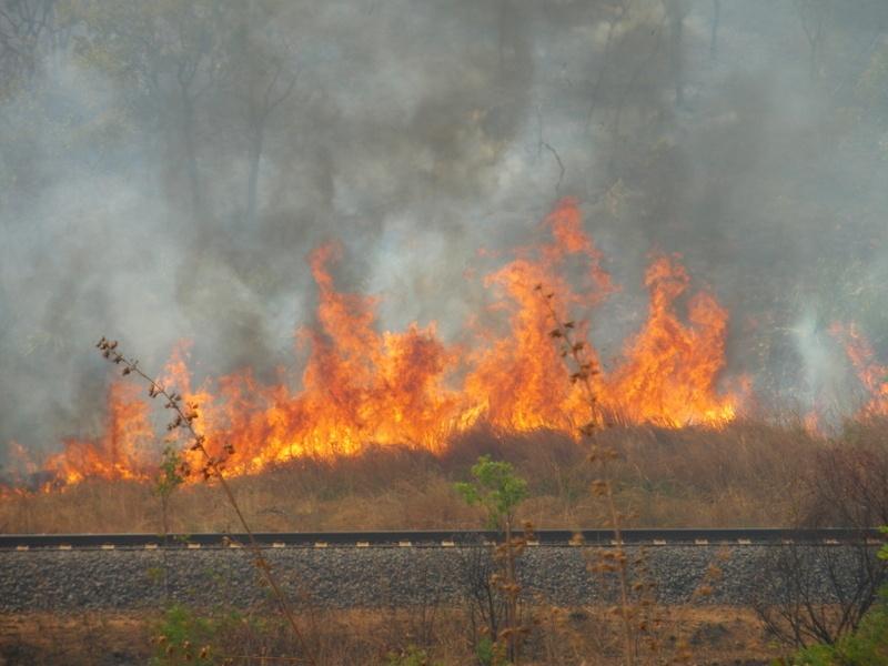 roadside fire