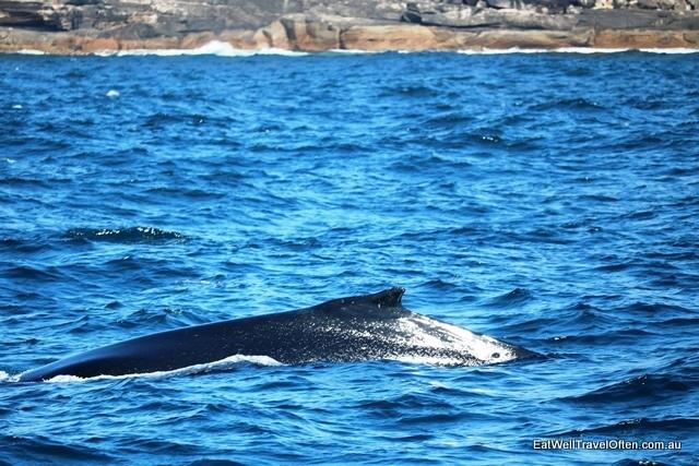 12 humpback