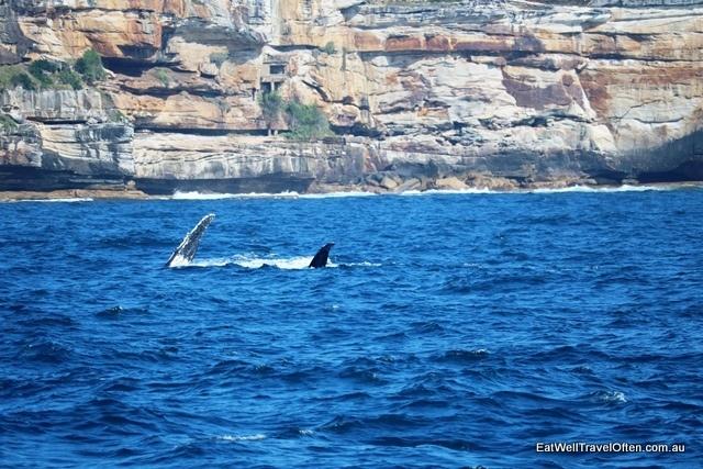 9 whale