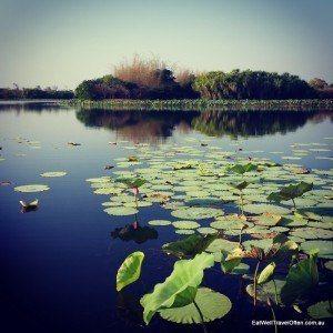 mary river wetlands-australia