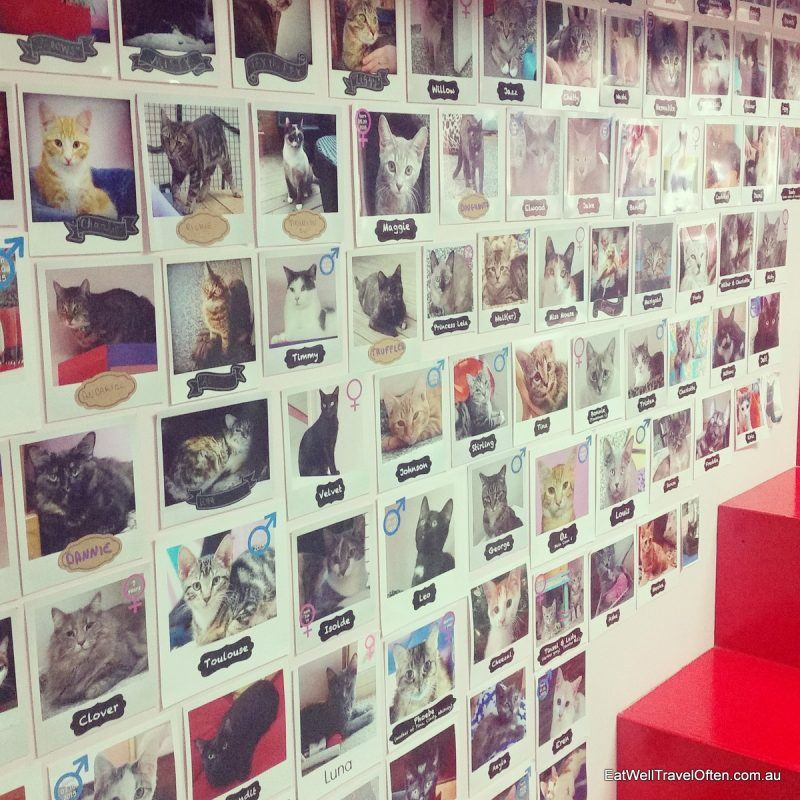 wall of adopted cats