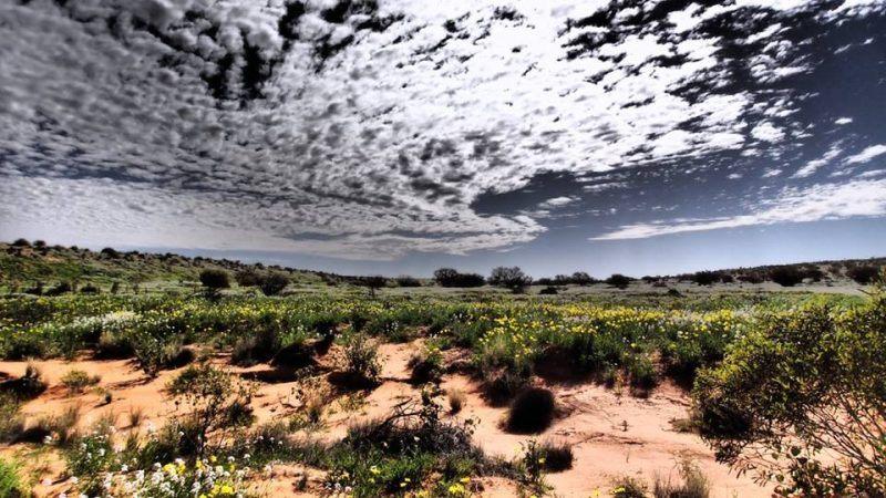 desertqueensland