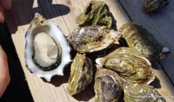 The best way to eat oysters